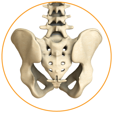 transfasten posterior si fusion system pelvis posterior view
